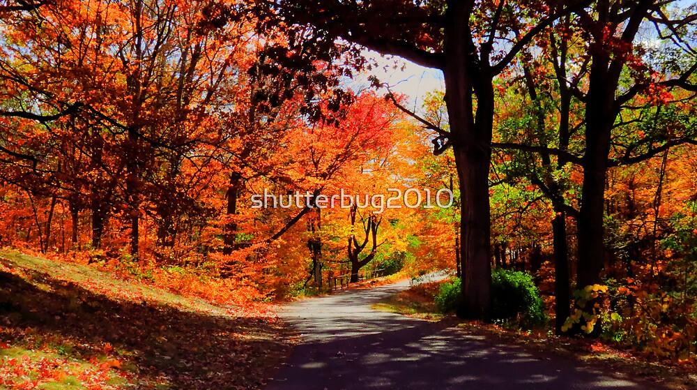 Autumn Drive by shutterbug2010