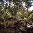 Kings Canyon walk by Rosie Appleton