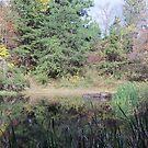 Jefferson Memorial Forest, near Louisville, Kentucky by Richard J. Bartlett