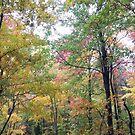 Jefferson Memorial Forest IV, near Louisville, Kentucky by Richard J. Bartlett