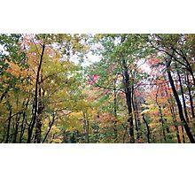 Jefferson Memorial Forest IV, near Louisville, Kentucky Photographic Print