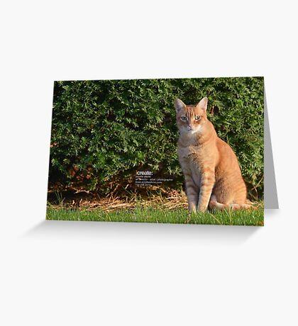 Stray Cat Greeting Card