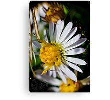 flowers at summer's end Canvas Print