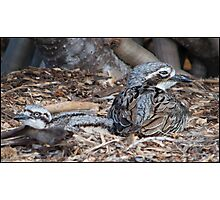 Curlew and Baby. Photographic Print