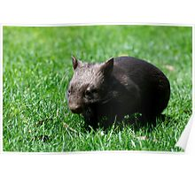 Little Orphan Lily the Wombat Poster