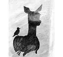 Fawn and bird in black and white Photographic Print
