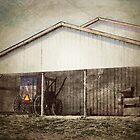 Amish by vigor