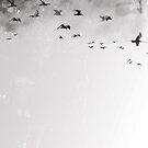 Birds II by Mauricio Pommella
