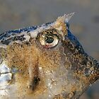 fishface by geophotographic