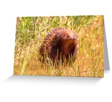 Please Wait I am coming  Echidna aka Spiny Ant Eater Greeting Card