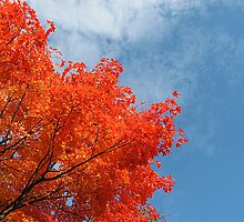 The Brilliance of October Color against the Sky by Jane Neill-Hancock