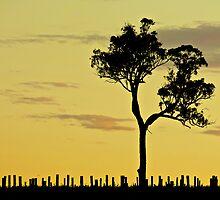 Sunset Vineyard 1 by D-GaP