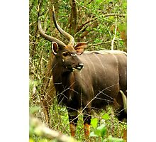 Forest Majestic Photographic Print