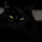 Black Female Turkish Angora - Miss Shyness  by © Sophie W. Smith