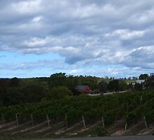 Wine Touring on Old Mission Peninsula by Karen Siekas