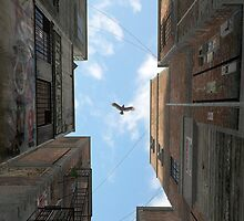 Afternoon Alley by Cynthia Decker