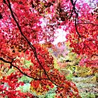 Candian Maples - Orton Effect by Colin J Williams Photography