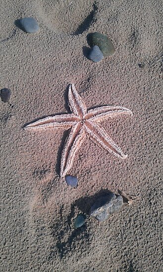 Starfish by DES PALMER