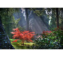 The Burning Bush Photographic Print
