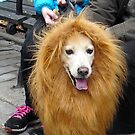 Tompkins Square Halloween Dog Parade Lion Dog by newyorknancy