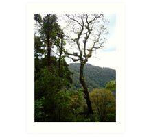 Tree of the Rainforest Art Print