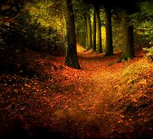 Enchanted Wood  by Yool