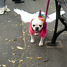 The Tompkins Square Halloween Dog Parade - Angel Dog by newyorknancy