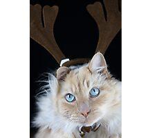Christmas Max Photographic Print