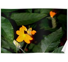 Tiny pumpkin colored flower Poster