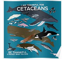 I Am Thankful For Cetaceans Poster