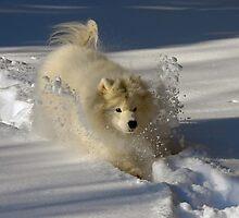 Snowplow by Lois  Bryan