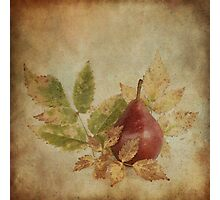 Red Pear Photographic Print