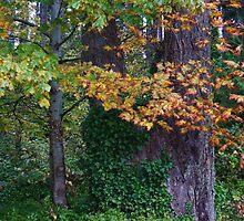 Autumn's Neon Brights by Rainydayphotos