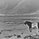 &quot;Queen of Ngorongoro&quot; (B&amp;W) by Andreas Koerner