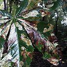 Leaf on the turn by Popy1