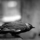 Crow by Chelsmonsterr