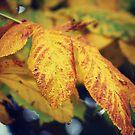 Leaves by Chelsmonsterr