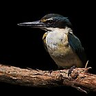 Kotare, The Kingfisher by Robyn Carter