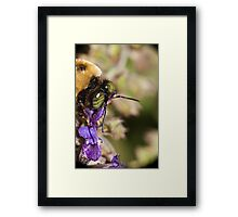 A Bee's eye view,... Framed Print