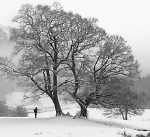 A Walk in the Snow by Wendy Williams