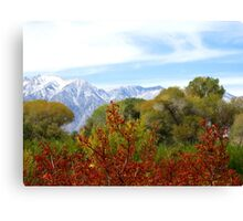 Burst Of Fall Canvas Print