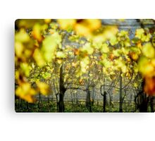 2012 - at the vineyard Canvas Print