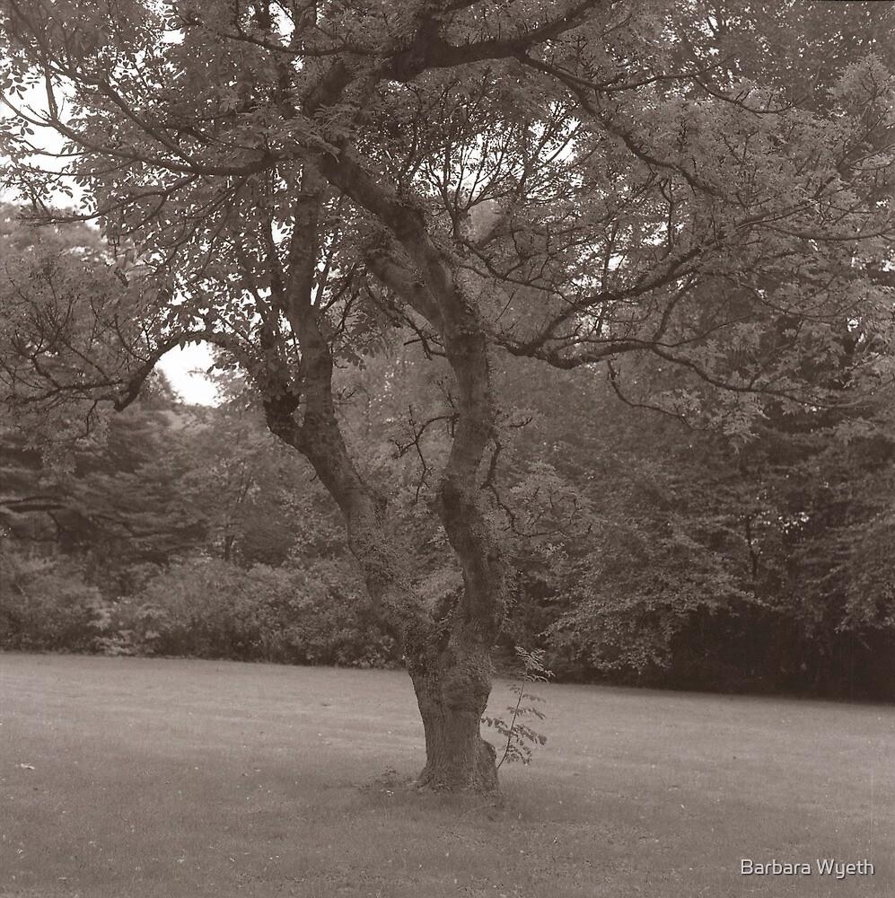 Tree in Leuven by Barbara Wyeth