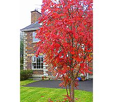 Autumn In Suburbia Photographic Print