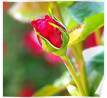 Time To Flower ~ Rose Bud ~ Poster