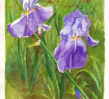 Irises in our front garden by Dai Wynn
