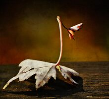 The Ghost of Spring... by Karen  Helgesen