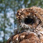 Tawny Owl by fg-ottico