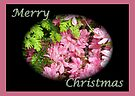 Merry Christmas Greeting Card - Pink Azalea by MotherNature