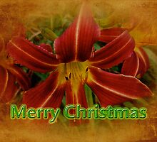 Merry Christmas Greeting Card - Daylily by MotherNature